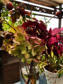 秋 お花1